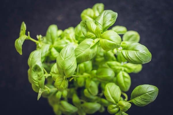 How to grow basil in a pot on your patio or deck