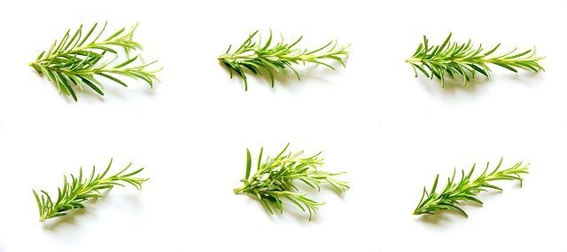 how to grow rosemary in containers in easy steps