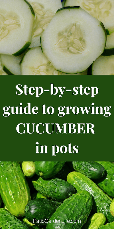 Cucumber slices and whole cucumbers - overlay text step-by-step guide to growing cucumbers in pots