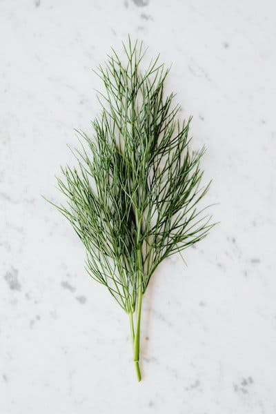 how to grow dill in a pot on your deck
