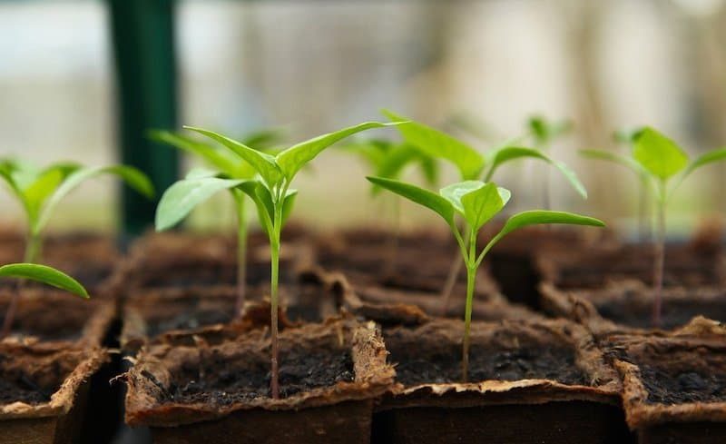 Seedlings in seed starting containers in a container garden - container garden planner to help choose your plants, seeds and containers