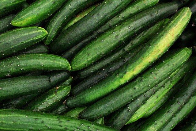 Dark green English cucumbers to grow in pots