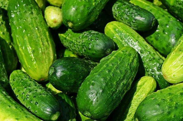 Whole dark green pickling pickles - how to grow in pots