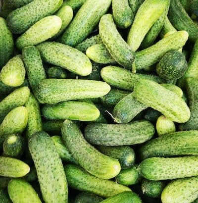 Light green pickling pickles - how to grow in containers