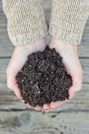 Two hands holding dark brown potting soil over a wooden surface
