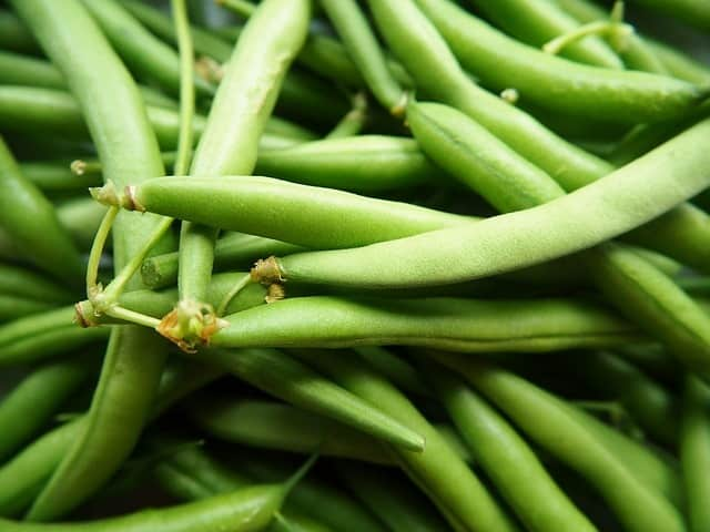 How to grow green beans in a pot