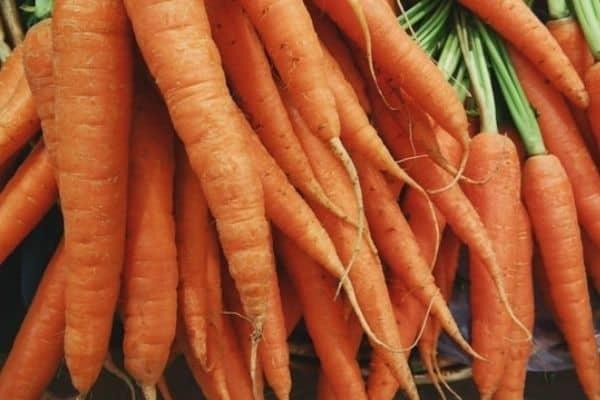 pile of orange carrots