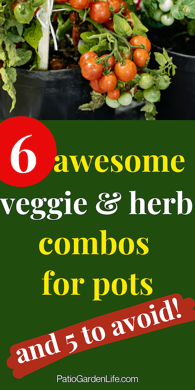 Red and green cherry tomatoes in a black container - overlay text 6 awesome veggie and herb combos for pots