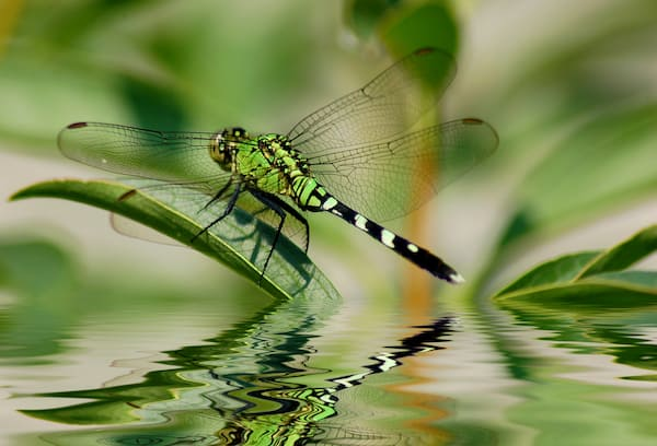 How to attract dragonflies to your container garden