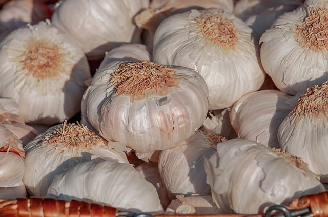 Pile of white garlic bulbs with paper skin peeling off in the sunlight