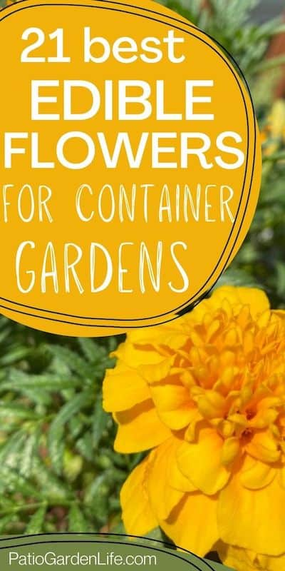 bright yellow-orange marigold flower with green foliage and text 21 best edible flowers for container gardens