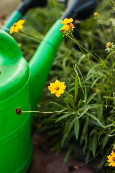 Must-have tools for container gardening